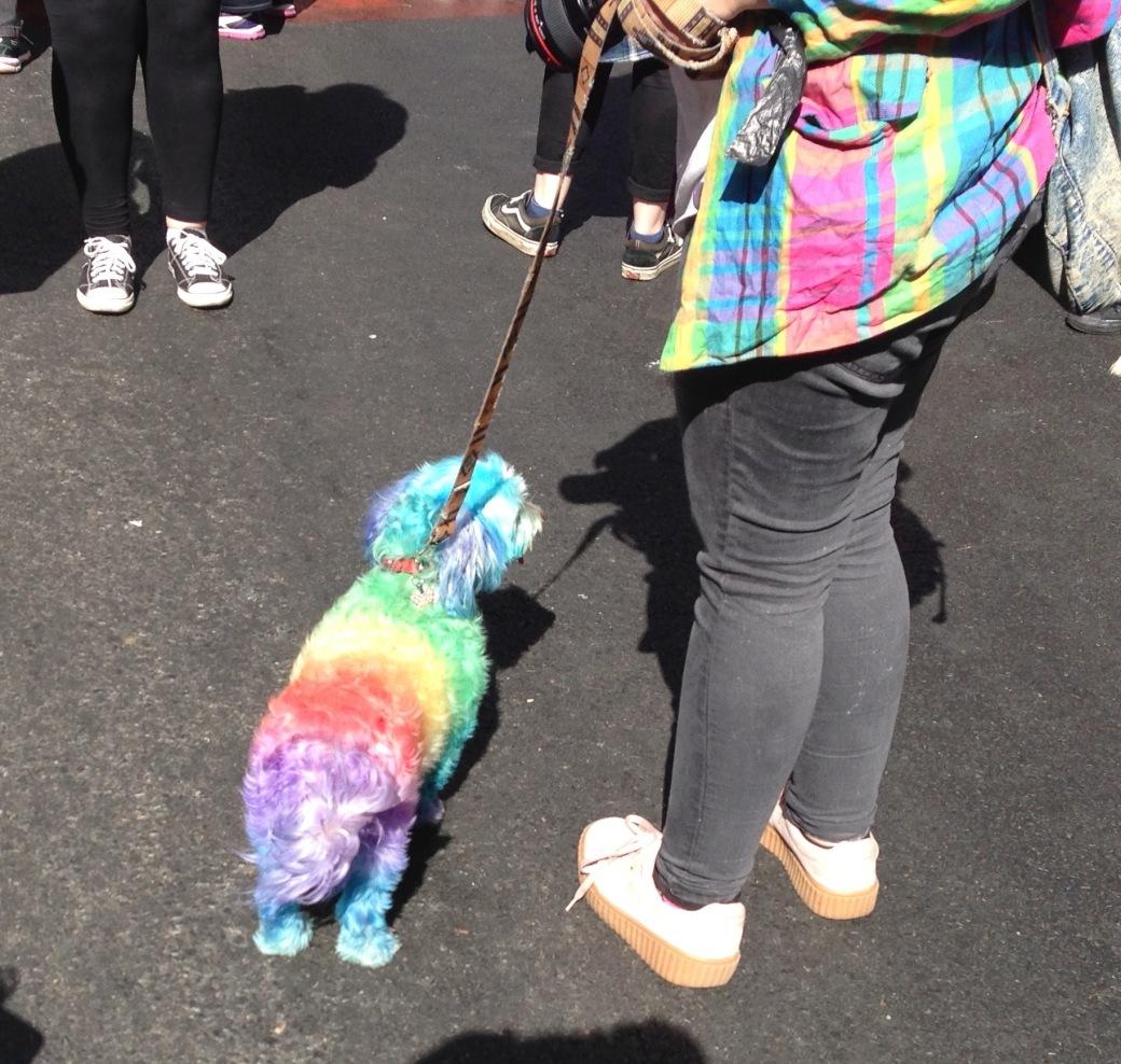 rainbowdog